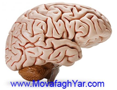 شگفتیهای مغز انسان