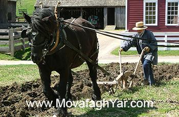 داستان پیرمرد کشاورز و شخم زدن زمین